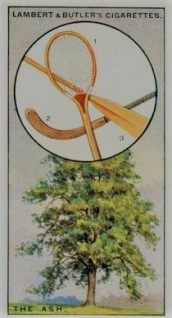 1927 British Trees Tennis Card