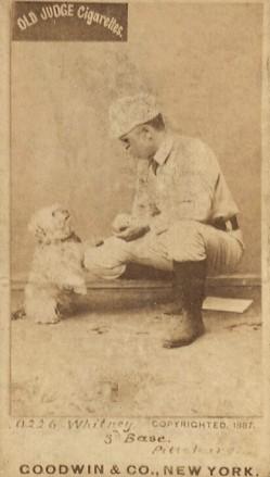 Art Whitney N172 Old Judge Dog